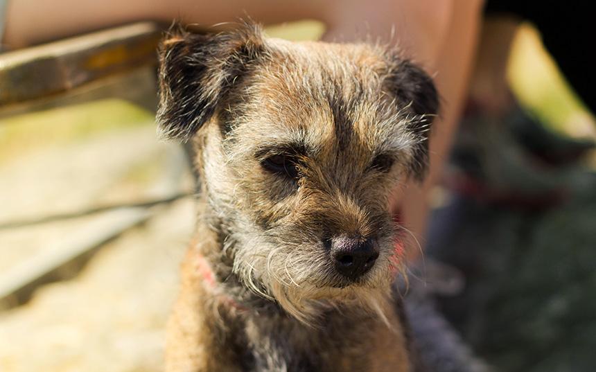 A portrait of Flippen the dog.