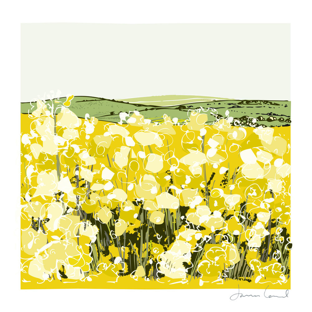 Whitwell oil seed field -    BUY NOW