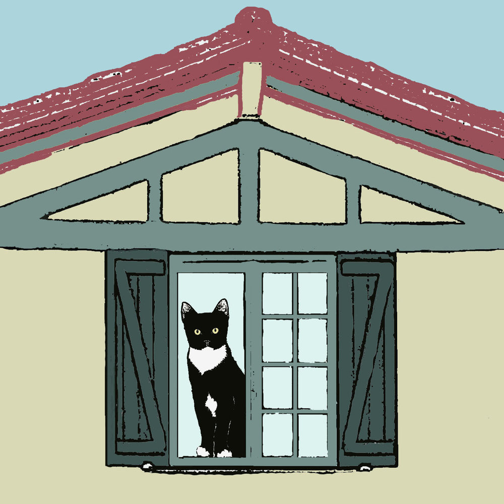 Cat with green shutters