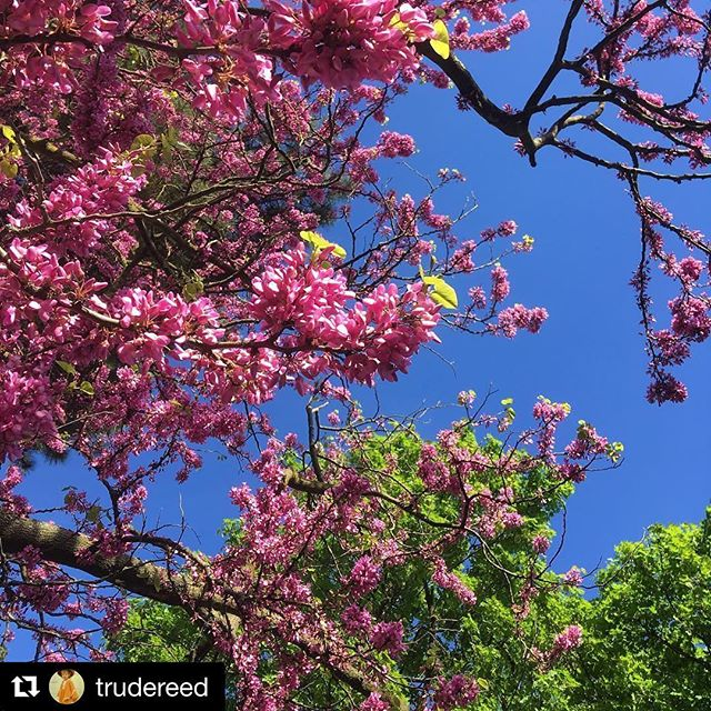 First. comes nature, then the breath. Soaking up the beauty #ilovespring #springcolors #magnifique #trees #treeoflife #colours #blessed #vibrant #life