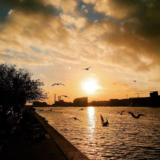 Out with the birds filming the sunset. #copenhagen #sunset #birds
