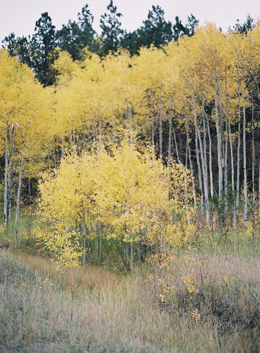 Colorful Fall Colorado Aspens on Film