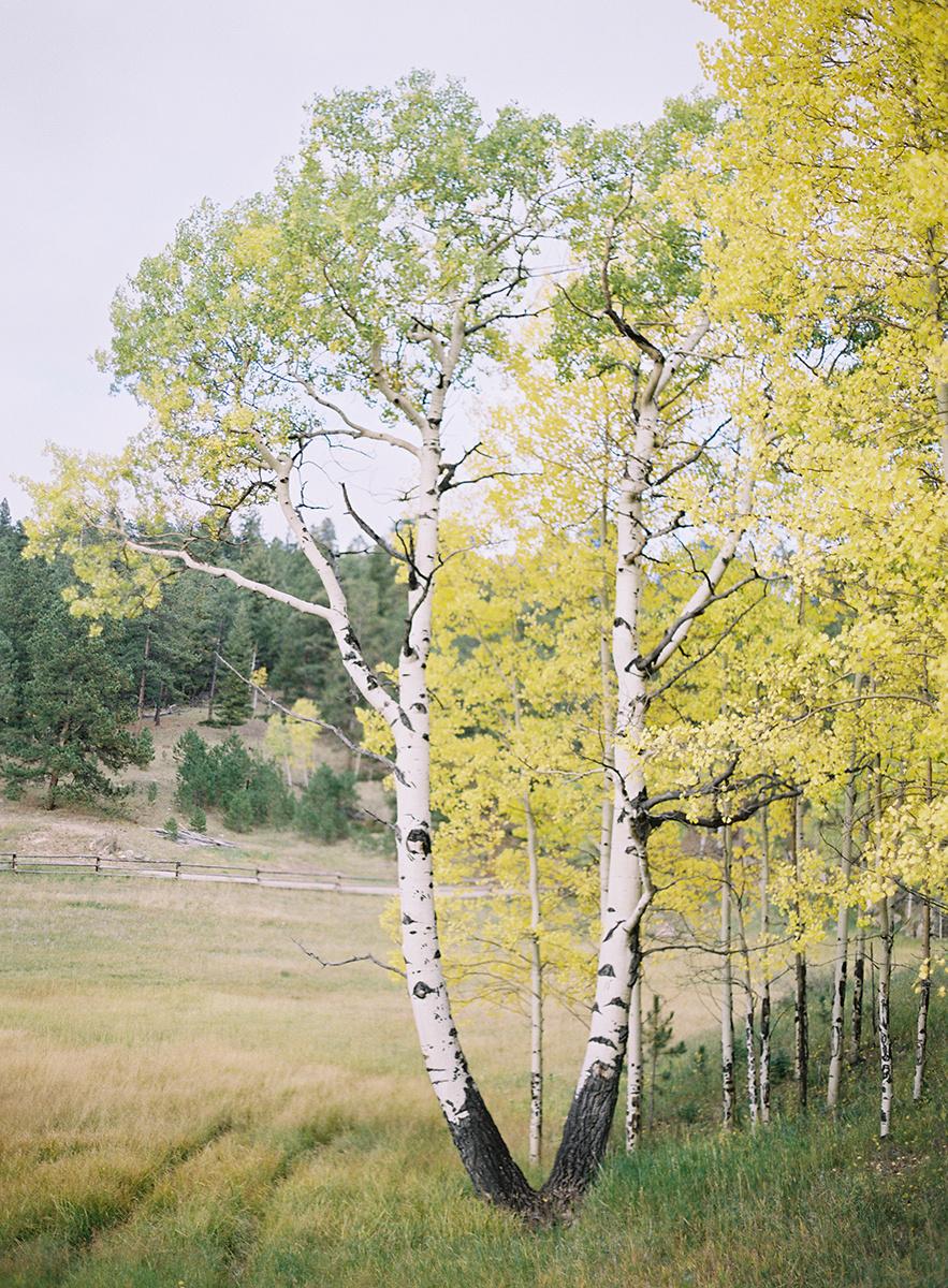 Colorado Fall Aspens on Film
