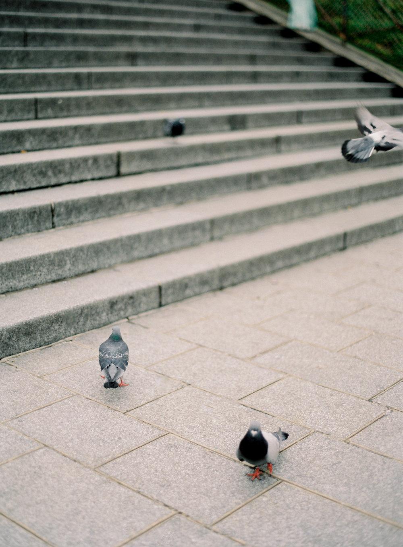 Paris France-Carrie King Photographer-142.jpg
