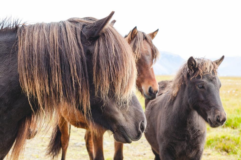 HORSES-9880.jpg