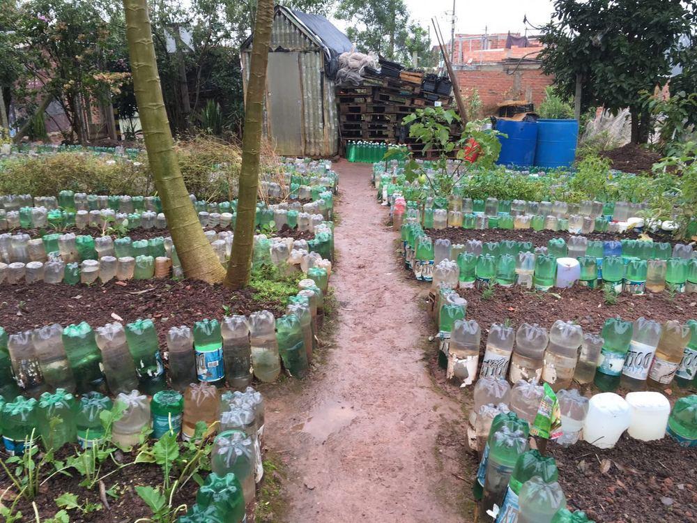 The amazing community garden