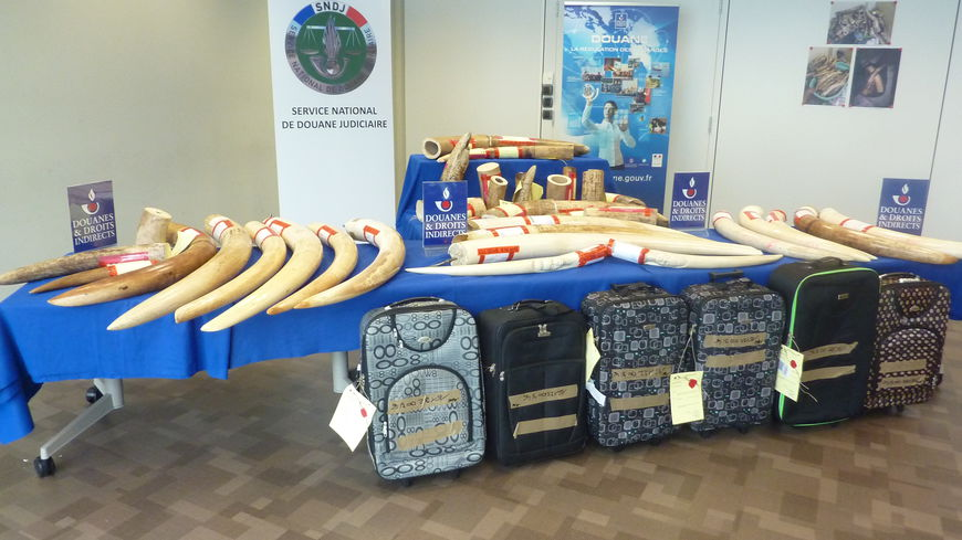Image 1. One seizure in early June 2016 further highlighted traffickers' reliance on excess luggage to move contraband: officials discovered 142 kilograms of ivory in six suitcases in Charles de Gaulle Airport. All six bags belonged to one passenger who was traveling from Angola to Vietnam through Paris. © Radio France - Adrien Bossard