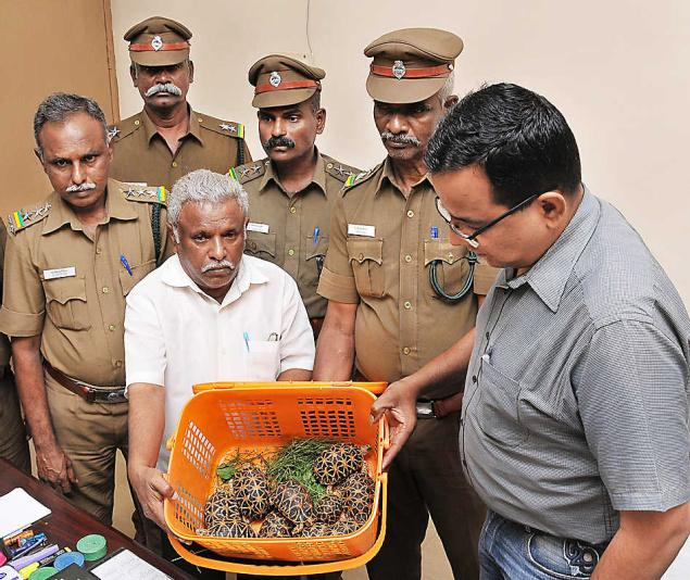 Image 6. Tortoise and narcotics trafficking suspect Abdul Alim and a few of the trafficked Indian star tortoises. Source: S. James