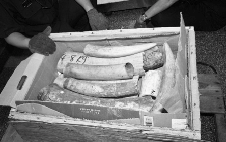 Image 13. Officials open one of the six boxes involved in the seizure. The box reads, 'Republic of South Africa.'