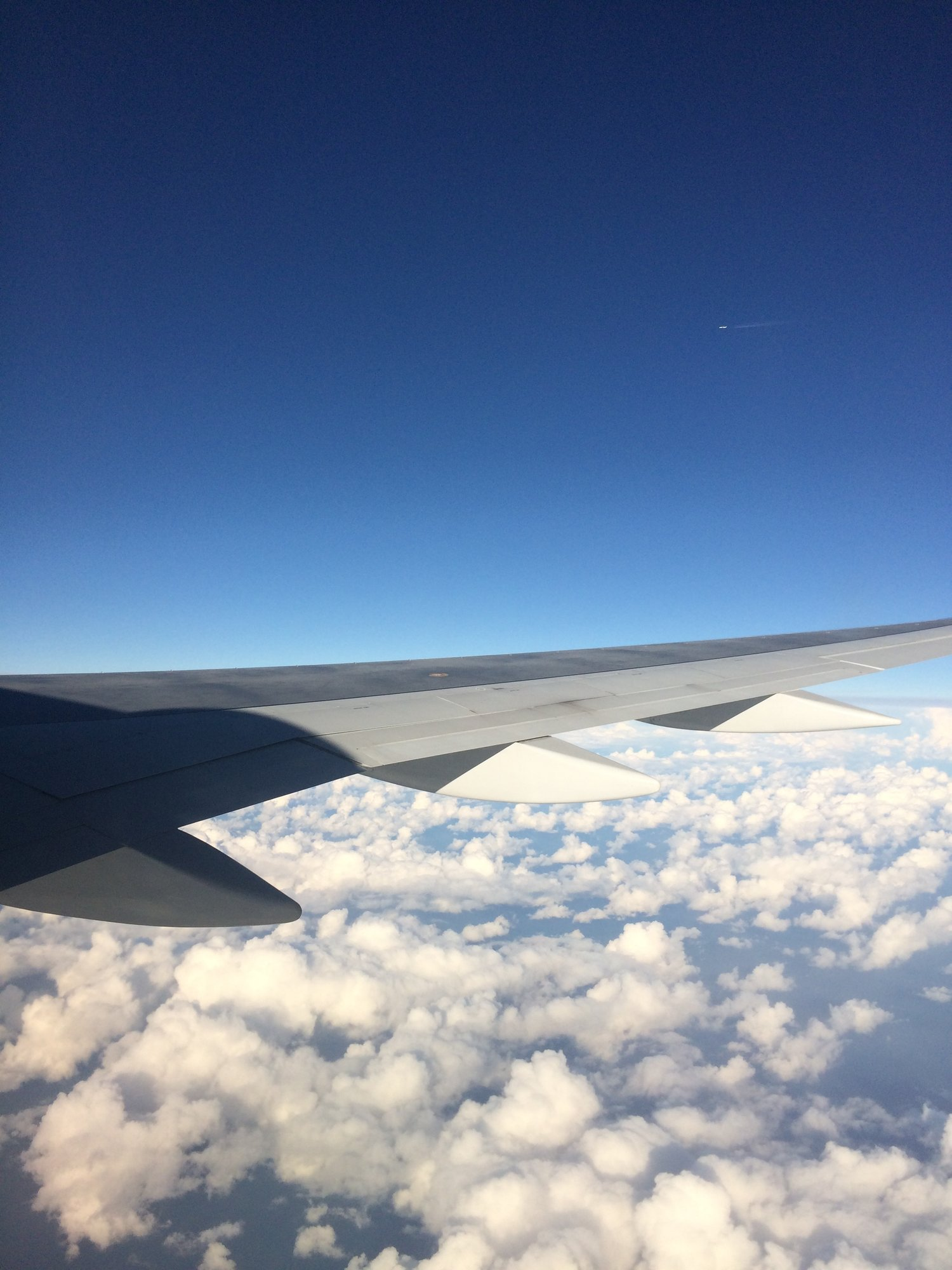 Flying Under the Radar: Wildlife Trafficking in the Air Transport ...
