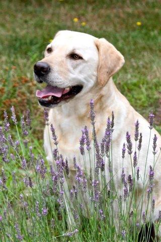 The Farm's granddog, Obie.