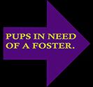 th_foster_heroes.jpg