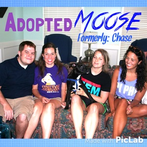 Chase-moose+adoption.jpg