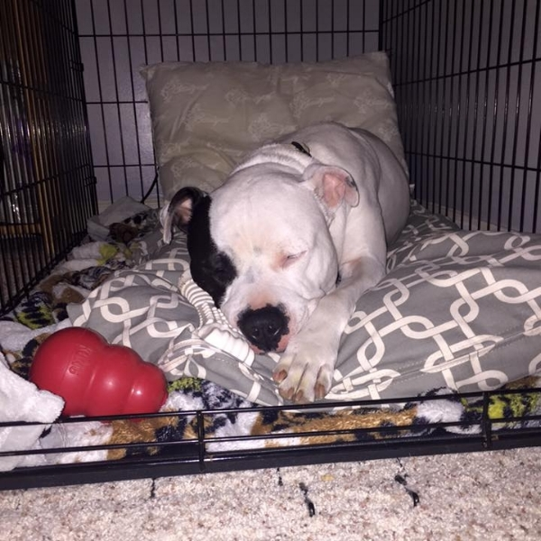 Alum Brody, chillin' in his crate