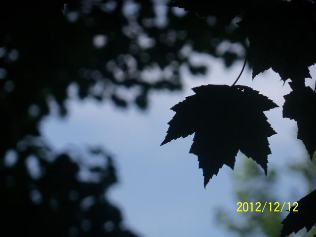 100_2940.jpg