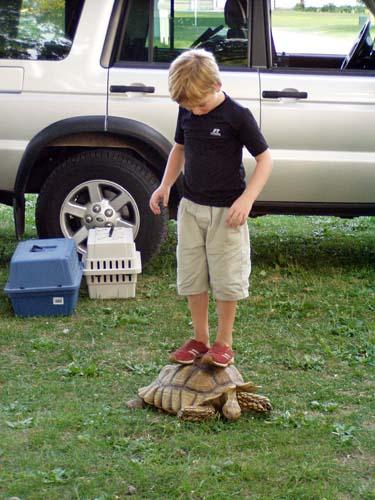 turtle-boarding.jpg