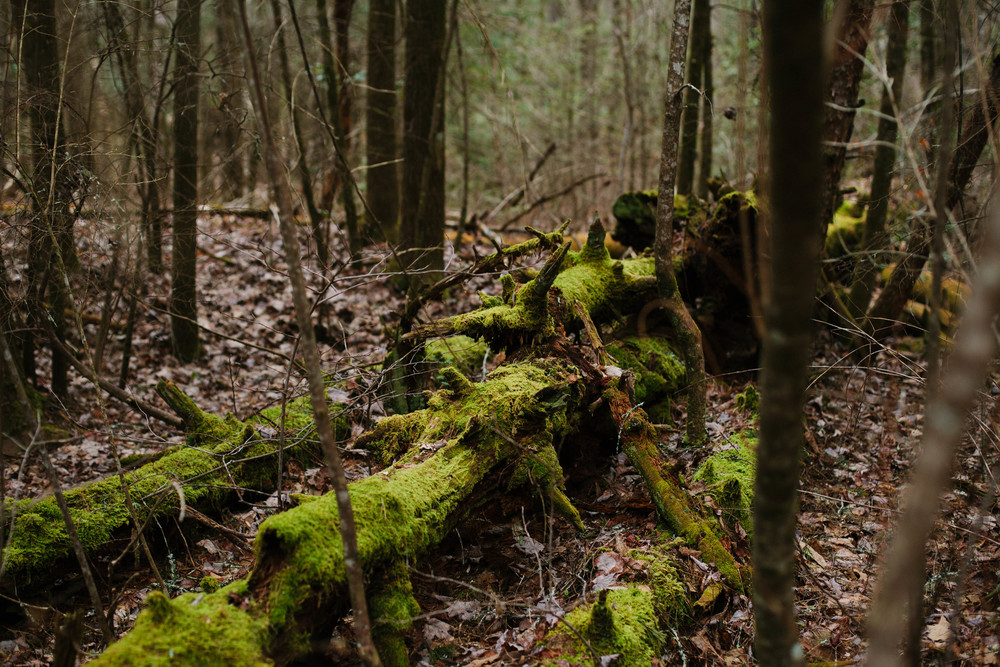 Image of mossy fallen decaying log in a forest
