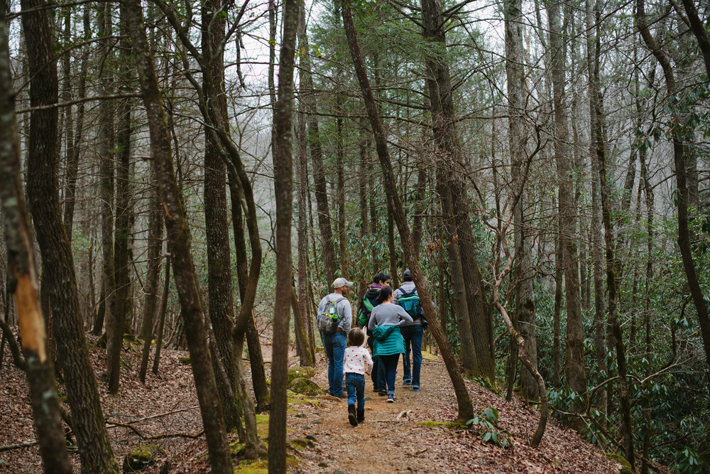 Image of group of people walking through forest