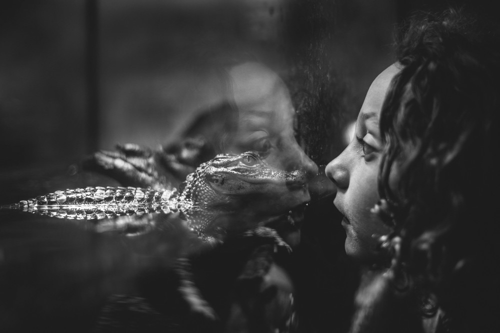 Image of girl looking at a baby alligator in an aquarium