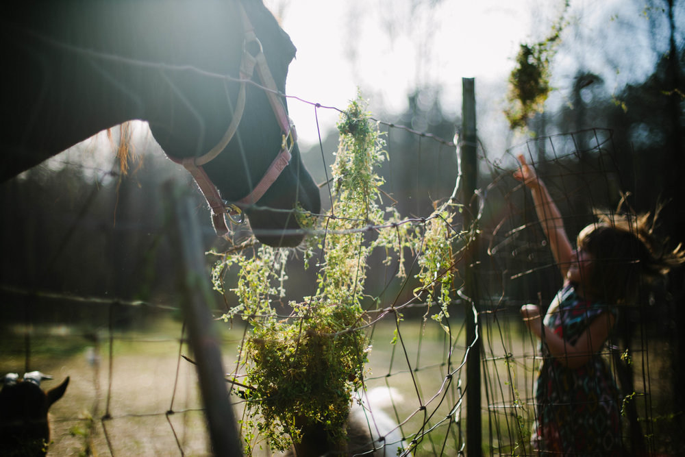 Girl throwing grass over a fence to a horse who is in the foreground