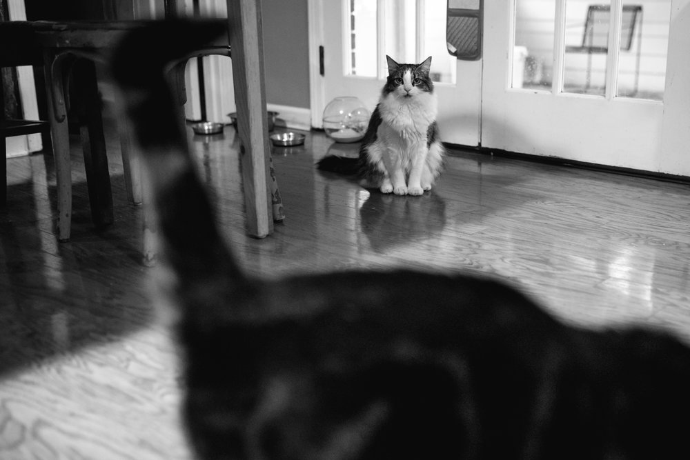 A cat looks at the camera and another cat walks by in the foreground