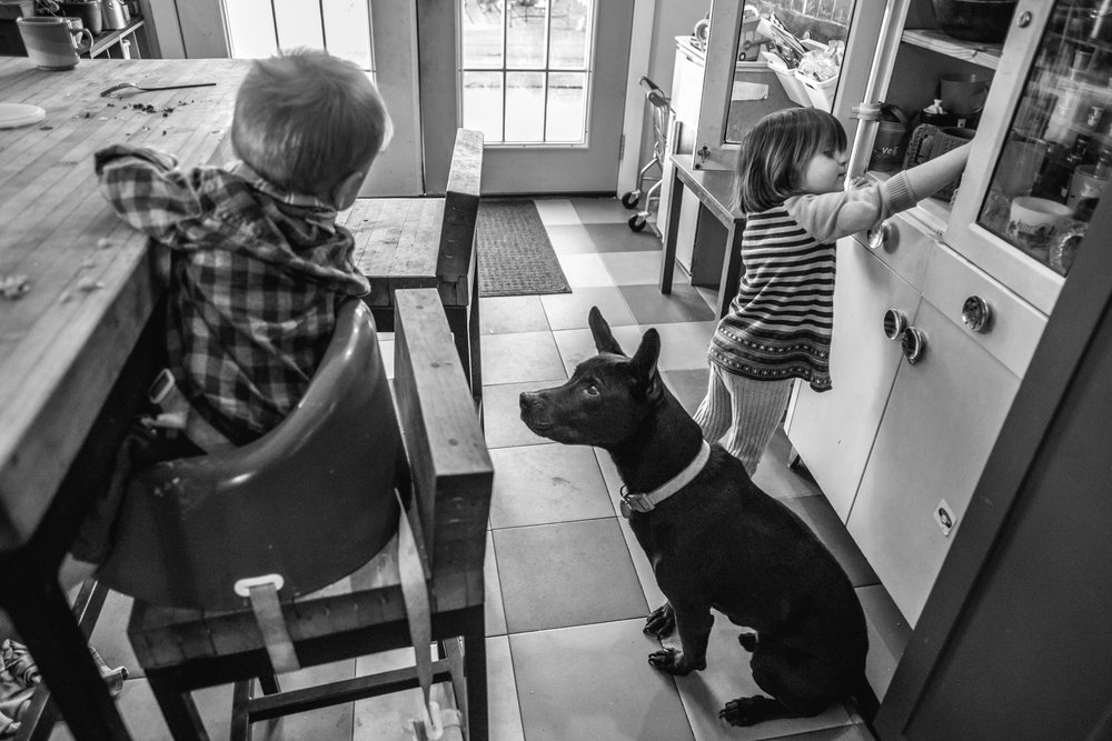 Dog looks at boy in a highchair in a kitchen while a girl reaches into a cabinet behind it
