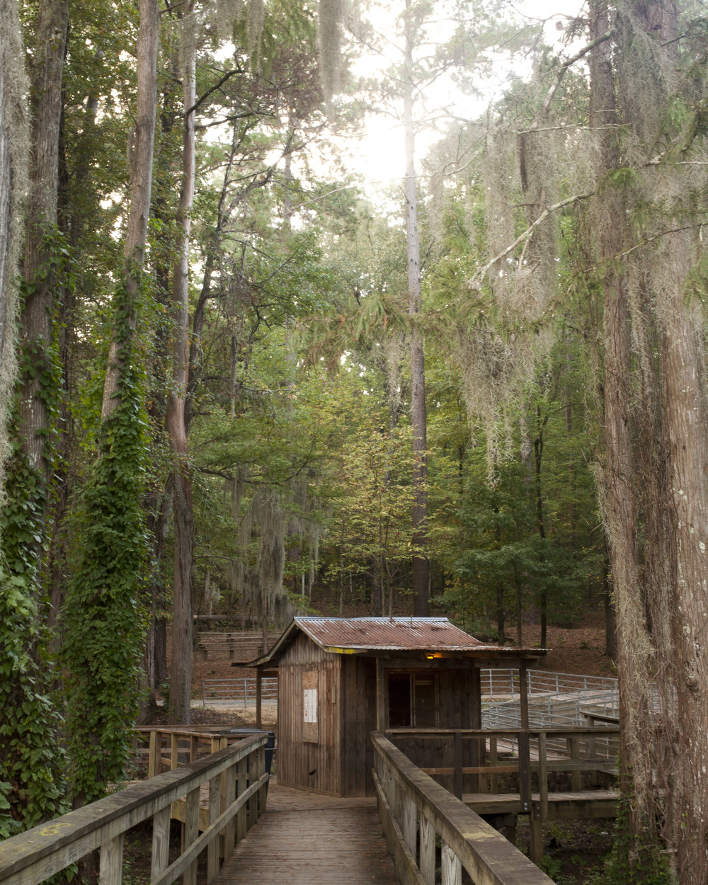 Caddo Lake State Park #1