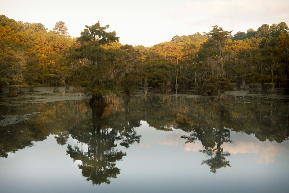 Caddo Lake State Park #2