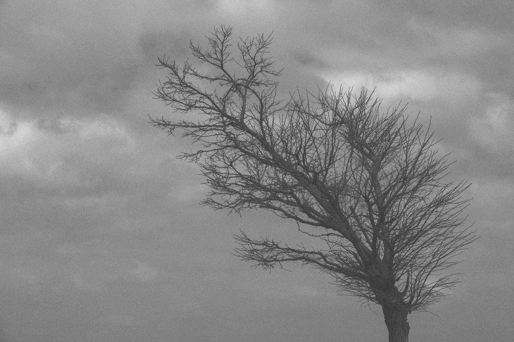 Lo primal del viento. *algún lunes de febrero 2017