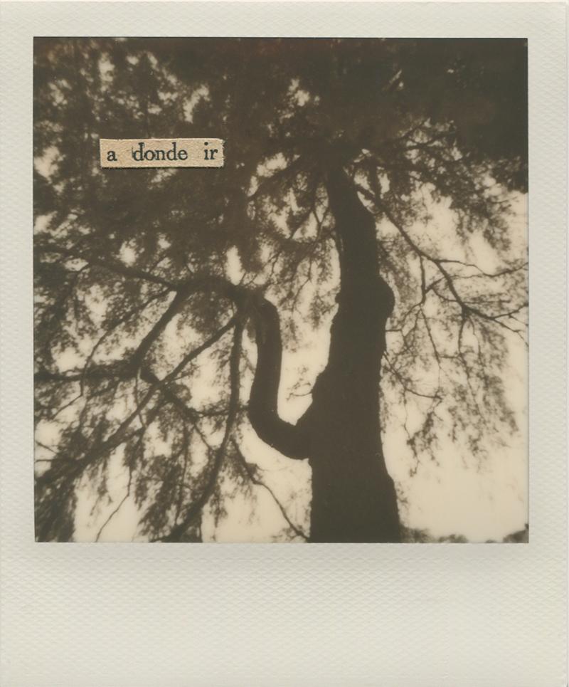 Polaroid 13 - Natalia Romay.jpg