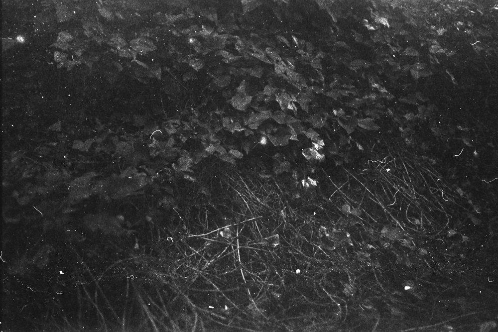 Ildford3200-NataliaRomay1.jpg