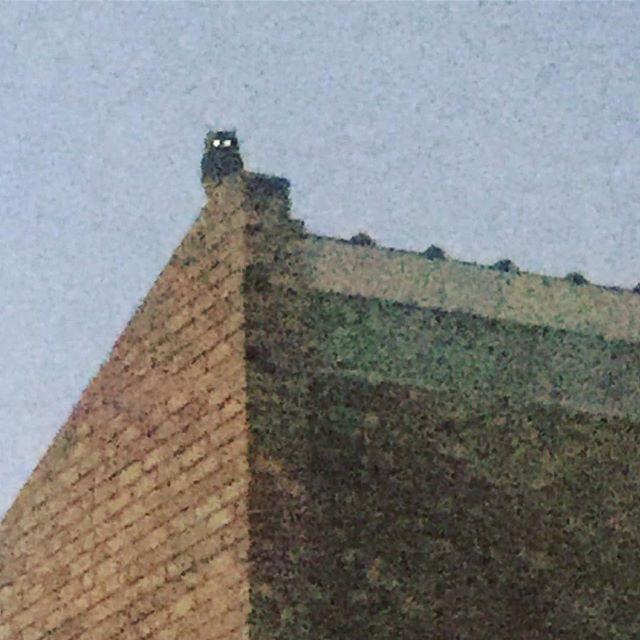 #owl house