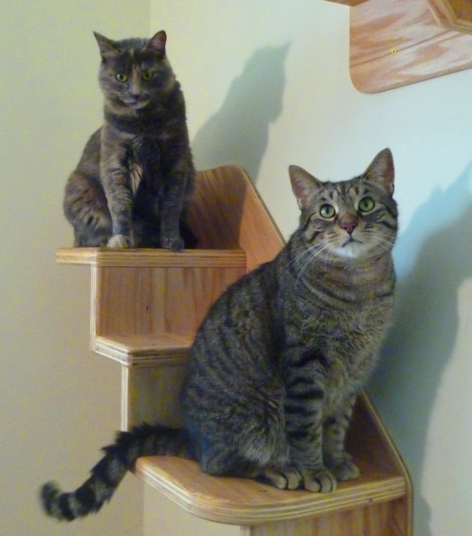 Genial Wall Mounted Cat Stairs