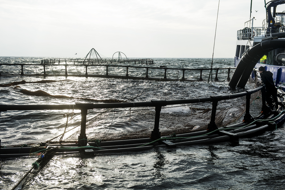 Havdambrug Musholm A/S Reersø Havn