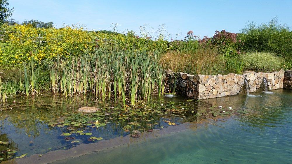pondworks_natural swimming pool_nsp_05.jpg