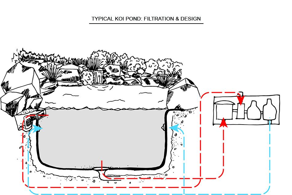 Pondworks_diagram_koi pond.jpg