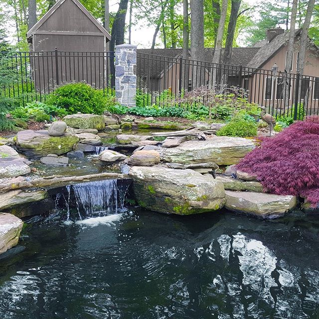 Doesn't this look nicer than the frozen landscape we see outside today? Spring will get here, eventually! #PondWorks #pondsofinstagram #igers_philly #backyardpond #waterfeature www.pondworksonline.com