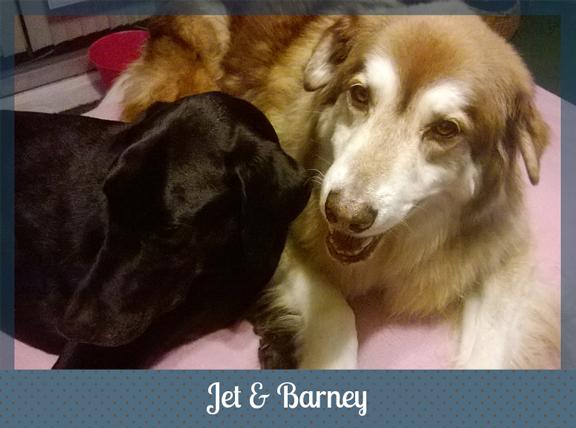 Jet-Barney-1