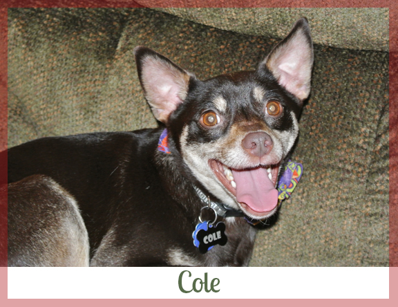 Adopted dog Cole
