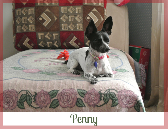 Adopted dog Penny