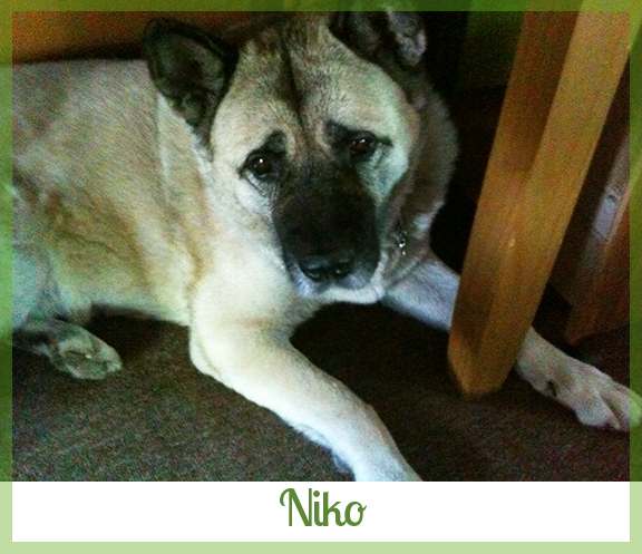 Adopted dog Niko