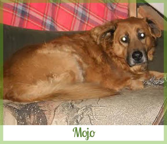 Adopted dog Mojo