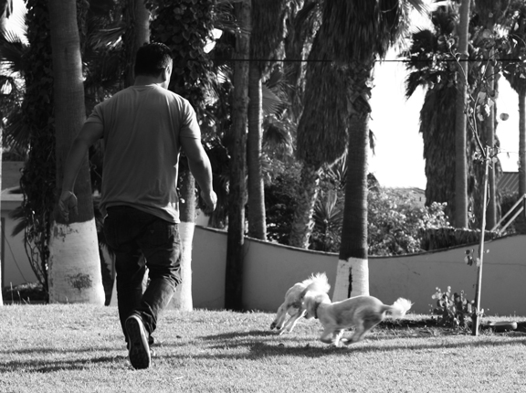 Dogs and dad running and playing