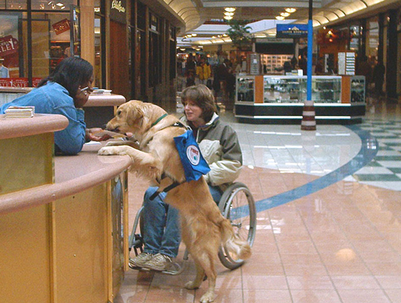 Service dog with woman