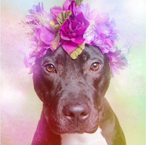 Flower power pit bull