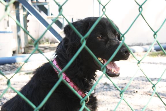 Rescued stray dog