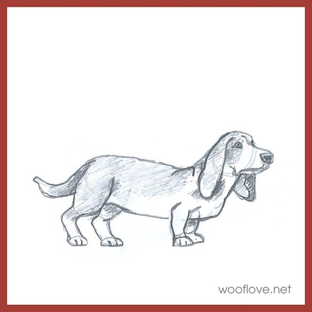 "Dog No. 30. Pencil sketch from the book ""Draw 50 dogs"" #the100dayproject #100daysofwoofloveart #dog #bassethound #doglover #wooflove #woofloveblogart #pencilsketch"