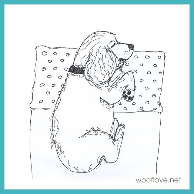 Dog No. 31. Live sketch from my dog having sweet dreams : ) #the100dayproject #100daysofwoofloveart #dog #cockerspaniel #doglover #wooflove #woofloveblogart #pensketch