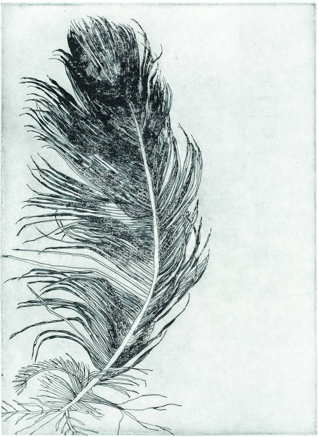 feather2-small.jpg