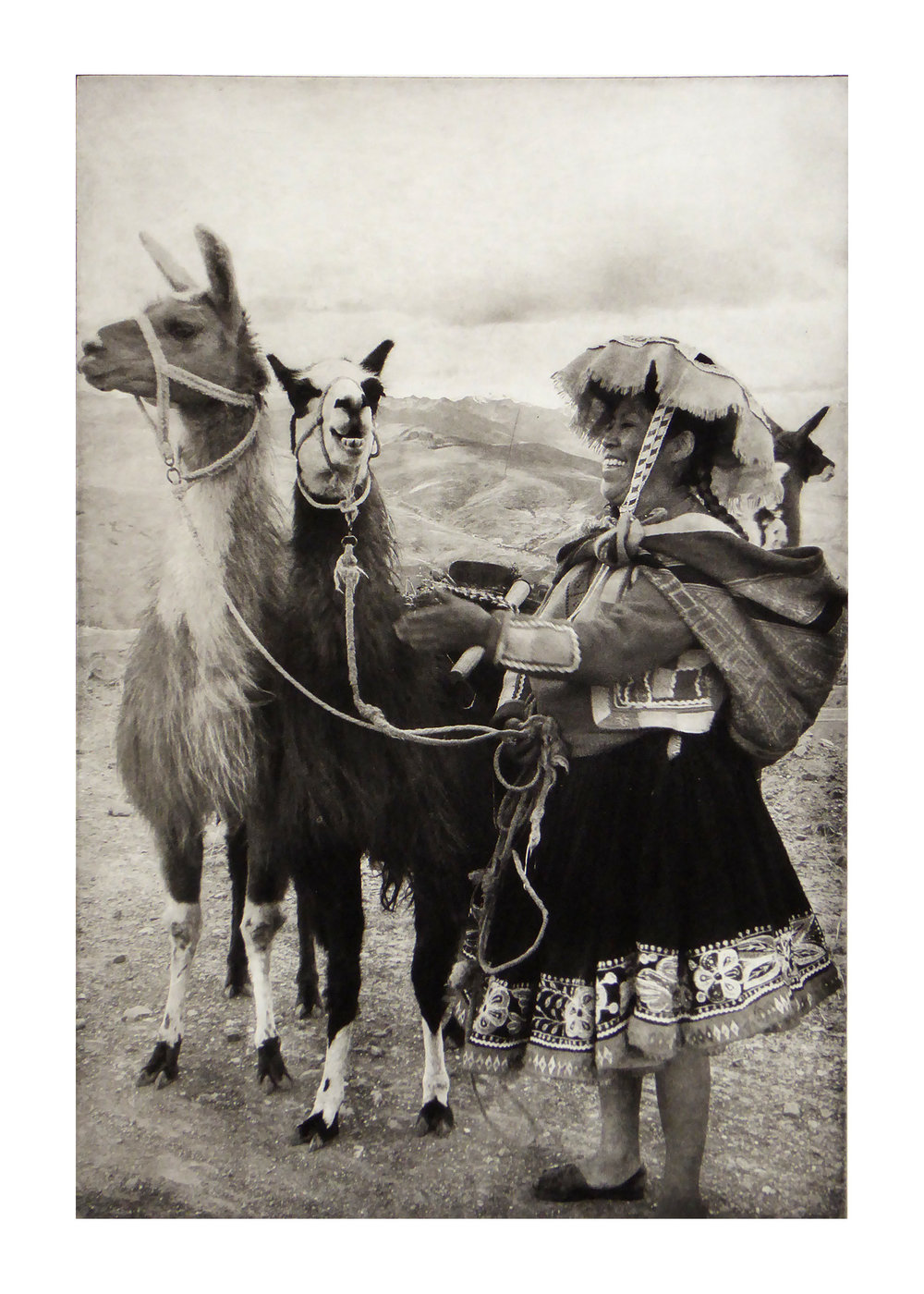 Belair_Laughing Llamas-2.jpg